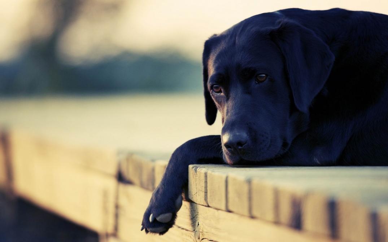 Posso Dar Dipirona Ao Meu Cachorro